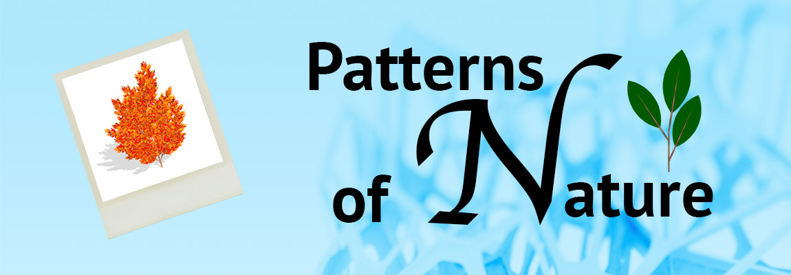 Patterns of Nature